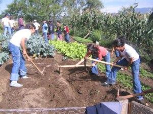 Women hard at work in community garden_jpg